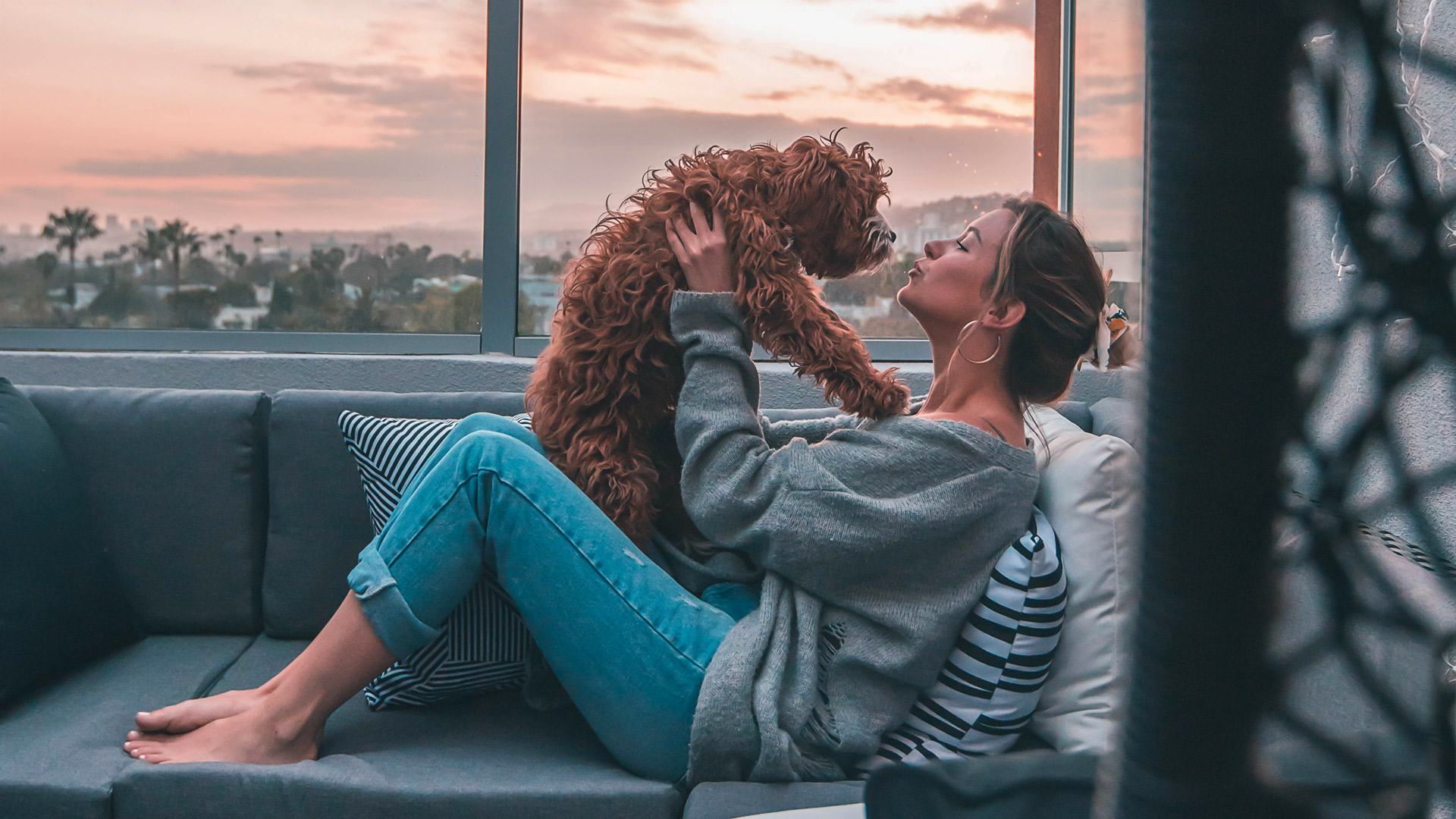 Mascotienda confianza mascotas